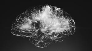 心理学と脳科学の違いは何?【茂木健一郎さん解説動画あり】